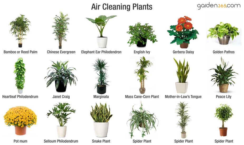 Recommended Indoor Air Cleaning Plants For Improved Quality